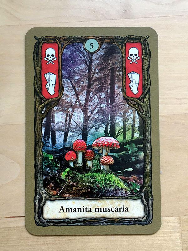 Fly Argaric - mushroom